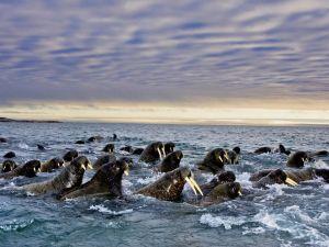 animal-migrations7